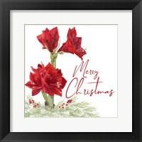 Framed Merry Amaryllis VI