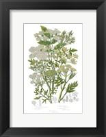 Framed Flowering Plants III
