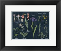 Framed Botanical Floral Chart II Dark Blue