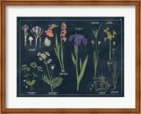 Framed Botanical Floral Chart II Dark Blue