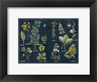Framed Botanical Floral Chart I Dark Blue