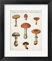 Framed Mushroom Chart III Light