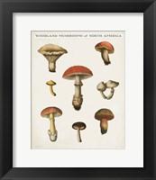 Framed Mushroom Chart II Light