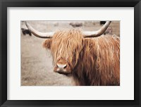 Framed Scottish Highland Cattle I Neutral