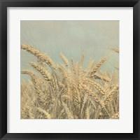 Framed Gold Harvest Crop
