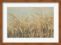 Framed Gold Harvest Panel