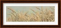 Framed Gold Harvest