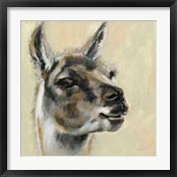Framed Llama Portrait
