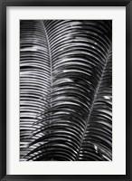 Framed Tropical III