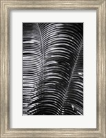 Framed Tropical III