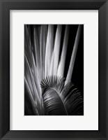 Framed Tropical II