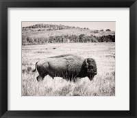 Framed Buffalo I BW