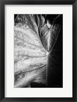 Framed Elephant Ear I