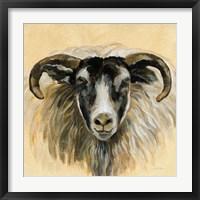 Framed Highland Animal Ram