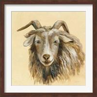 Framed Highland Animal Sheep