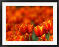 Framed Tulips Forever