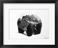 Framed Black & White Bear