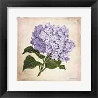 Framed Vintage Lilac