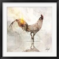 Framed Rooster Poised