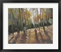 Framed Backlit Woods
