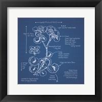 Framed Blueprint Florals I