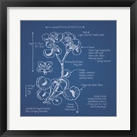 Framed Blueprint Florals I