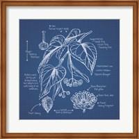 Framed Blueprint Florals II