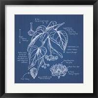 Framed Blueprint Florals II