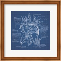 Framed Blueprint Florals III