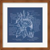 Framed Blueprint Florals III