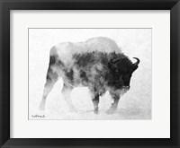 Framed Black & White Buffalo
