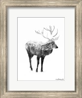 Framed Black & White Elk