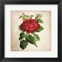 Framed Vintage Red Rose