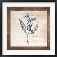 Framed Petals on Planks - Sage