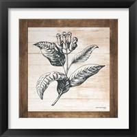 Framed Petals on Planks - Allspice