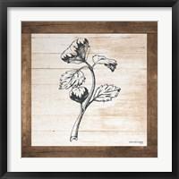 Framed Petals on Planks - Celery