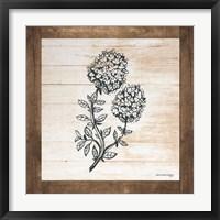 Framed Petals on Planks - Thyme