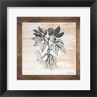 Framed Petals on Planks - Ginseng