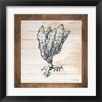 Framed Petals on Planks - Horseradish