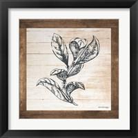 Framed Petals on Planks - Bay Leaf