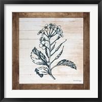Framed Petals on Planks - Mustard