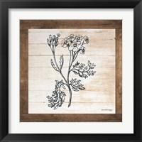 Framed Petals on Planks - Achilles