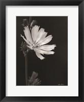 Framed Flower Petal Wishes