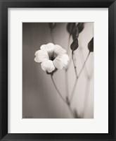 Framed Blossoming Soul