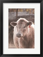 Framed Portrait of a Cow
