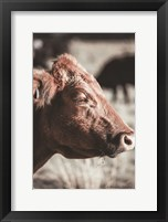 Framed Hungry Cow