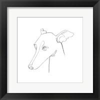 Framed Greyhound Pencil Portrait I