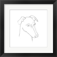 Framed Greyhound Pencil Portrait II