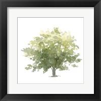 Framed Lonely Oak I