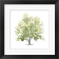 Framed Lonely Oak II